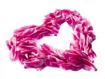 Corazón de la tarjeta del día de San Valentín Foto de archivo libre de regalías