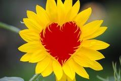 Corazón de la tarjeta del día de San Valentín del girasol Imagen de archivo