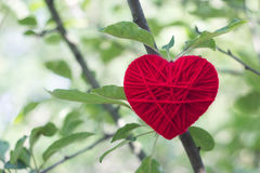 Corazón de lana rojo que crece en un árbol, día de tarjetas del día de San Valentín, amor Fotos de archivo libres de regalías