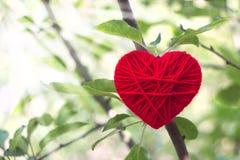 Corazón de lana rojo que crece en un árbol en las luces del sol, tarjetas del día de San Valentín Imagen de archivo