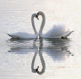 Corazón de los cisnes Foto de archivo libre de regalías