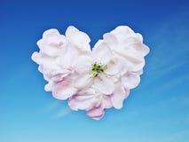 Corazón de los pétalos Foto de archivo libre de regalías
