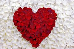 Corazón de los pétalos de Rose Imagen de archivo