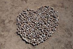 Corazón de Macademia Imagen de archivo libre de regalías