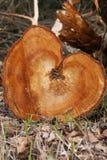 Corazón de madera (formato de retrato) Imagen de archivo libre de regalías