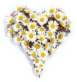 Corazón de margaritas Imagen de archivo