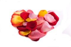 Corazón de pétalos color de rosa Fotos de archivo libres de regalías