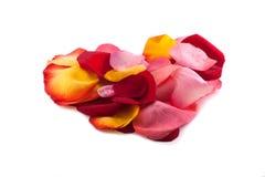Corazón de pétalos color de rosa Imagen de archivo