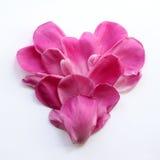 Corazón de pétalos rosados delicados Imágenes de archivo libres de regalías