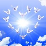 Corazón de palomas Imágenes de archivo libres de regalías
