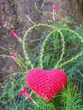 Corazón de Ted en vid y la flor verdes debajo del árbol grande imagen de archivo libre de regalías