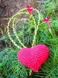 Corazón de Ted en vid y la flor verdes debajo del árbol grande foto de archivo