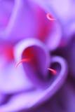 Corazón de una flor Imágenes de archivo libres de regalías
