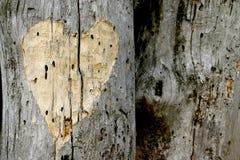Corazón del amor Foto de archivo