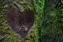 Corazón del amor en árbol Fotografía de archivo libre de regalías