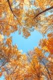 Corazón del bosque A del otoño El corazón de los árboles Cielo azul en la forma de un corazón fotografía de archivo