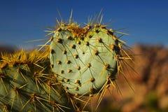 Corazón del cactus foto de archivo