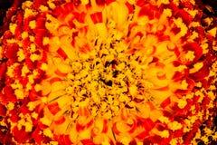 Corazón del Gerbera fotografía de archivo