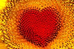 Corazón del girasol Imágenes de archivo libres de regalías