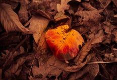 Corazón del otoño Foto de archivo libre de regalías