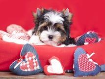 Corazón del perrito y de la tarjeta del día de San Valentín foto de archivo