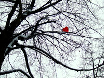 Corazón en árbol fotografía de archivo