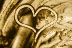 Corazón en el fondo blanco Foto de archivo libre de regalías