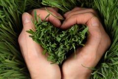Corazón en hierba Fotografía de archivo