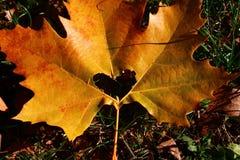 Corazón en hoja del otoño en un fondo de la naturaleza del otoño Fotografía de archivo libre de regalías