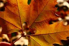 Corazón en hoja del otoño en un fondo de la naturaleza del otoño Imagen de archivo libre de regalías