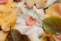 Corazón en lluvia Fotos de archivo