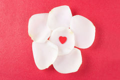 Corazón en los pétalos color de rosa Fotos de archivo libres de regalías