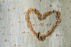 Corazón en un árbol Fotografía de archivo