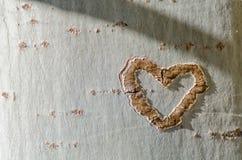 Corazón en un árbol Foto de archivo