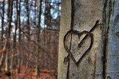 Corazón en un árbol Imagen de archivo libre de regalías
