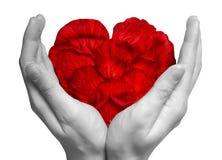 Corazón hecho de los pétalos de rosa rojos en las manos Imágenes de archivo libres de regalías