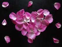 Corazón hecho de pétalos color de rosa imágenes de archivo libres de regalías
