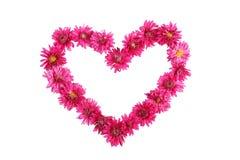 Corazón hermoso con los crisantemos púrpuras aislados en blanco Foto de archivo libre de regalías