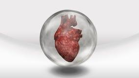 Corazón humano en esfera Foto de archivo libre de regalías