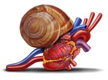 Corazón lento Imágenes de archivo libres de regalías