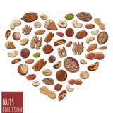 Corazón Nuts stock de ilustración