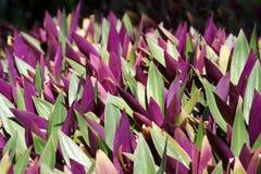 Corazón púrpura Fotos de archivo