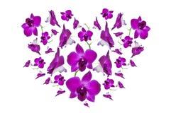 Corazón púrpura de la orquídea Imagenes de archivo