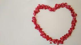 Corazón Patals en el fondo blanco Foto de archivo libre de regalías