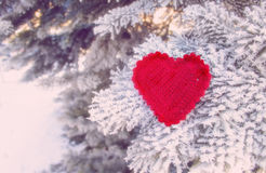 Corazón que hace punto decorativo en rama del abeto Concepto de las vacaciones de invierno Fondo del concepto del amor 14 de febr Imágenes de archivo libres de regalías