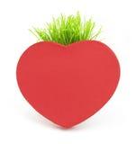 Corazón rojo con el tallo de la hierba Imágenes de archivo libres de regalías