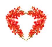 Corazón rojo de la orquídea Fotografía de archivo