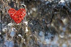 Corazón rojo de la tarjeta del día de San Valentín en un árbol nevoso Fotos de archivo