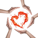 Corazón rojo del chapoteo del agua con las manos humanas aisladas en blanco Imagen de archivo