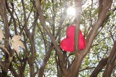 Corazón rojo en el árbol Imagen de archivo